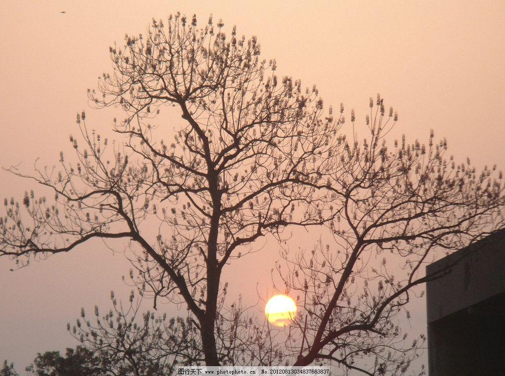 大树中的朝阳 清晨 太阳 树枝 天空 自然风景 自然景观 摄影 72dpi