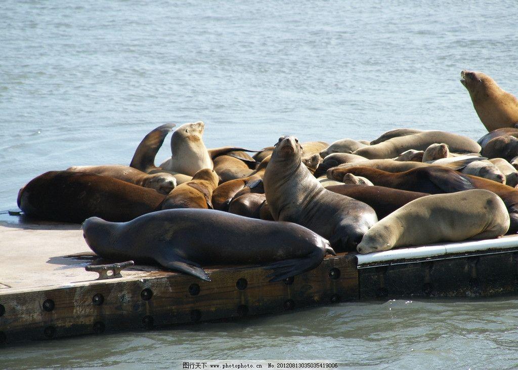 海狮 海豹 野生动物 可爱 保护动物 晒太阳 生物世界 摄影 314dpi jpg