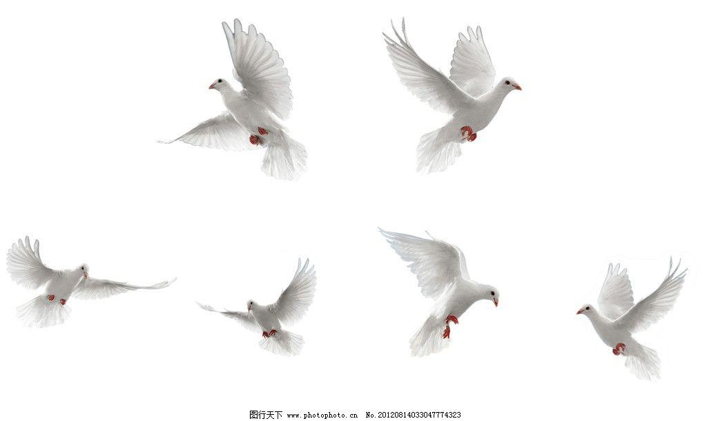 飞翔中的鸟 海鸥 飞翔中的海鸥 鸽子 矢量动物图案 psd分层素材 源