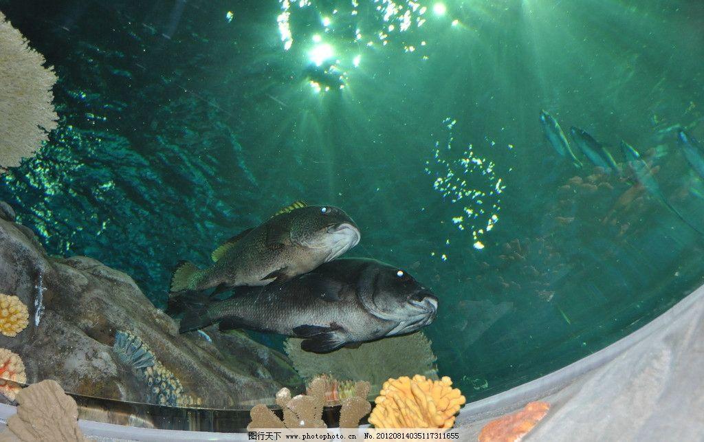 壁纸 动物 海底 海底世界 海洋馆 水族馆 鱼 鱼类 1024_643
