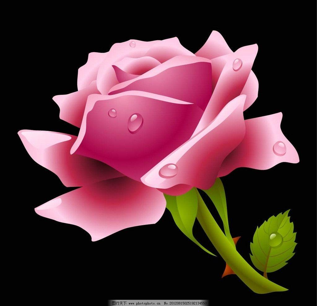 玫瑰花 水珠 绿叶 装饰 图案 画 鼠绘 手绘 网格 黑色 背景 花草 生物