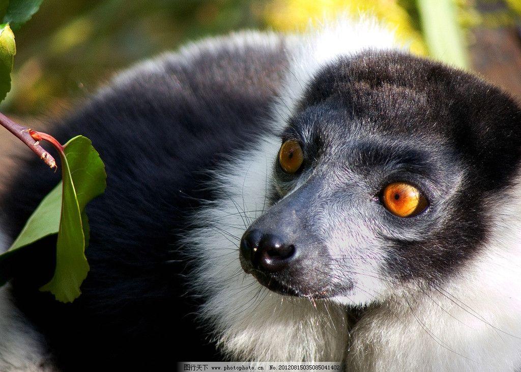 小浣熊 野生动物 保护动物 可爱 生物世界 摄影 609dpi jpg