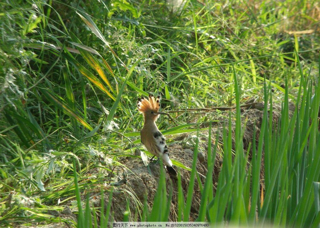 啄木鸟 小鸟 鸟类 生物世界 摄影 72dpi jpg