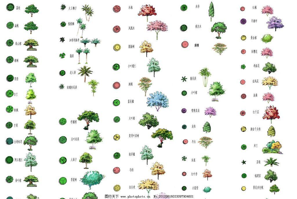 平立树木大全 植物 手绘树木
