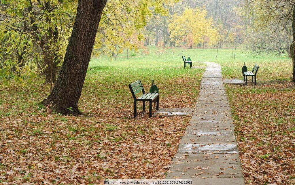 公园 风景 风光 美景 大路 马路 树木 落叶 枫叶 自然 树林 森林 风光