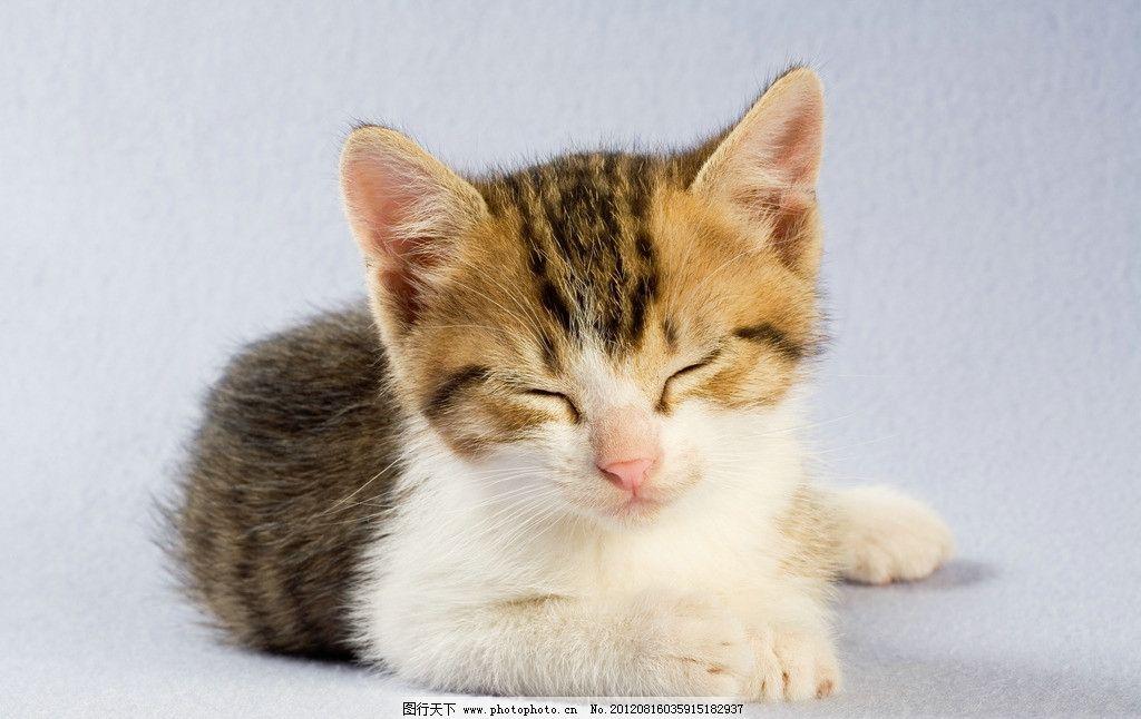 小猫对称剪纸步骤