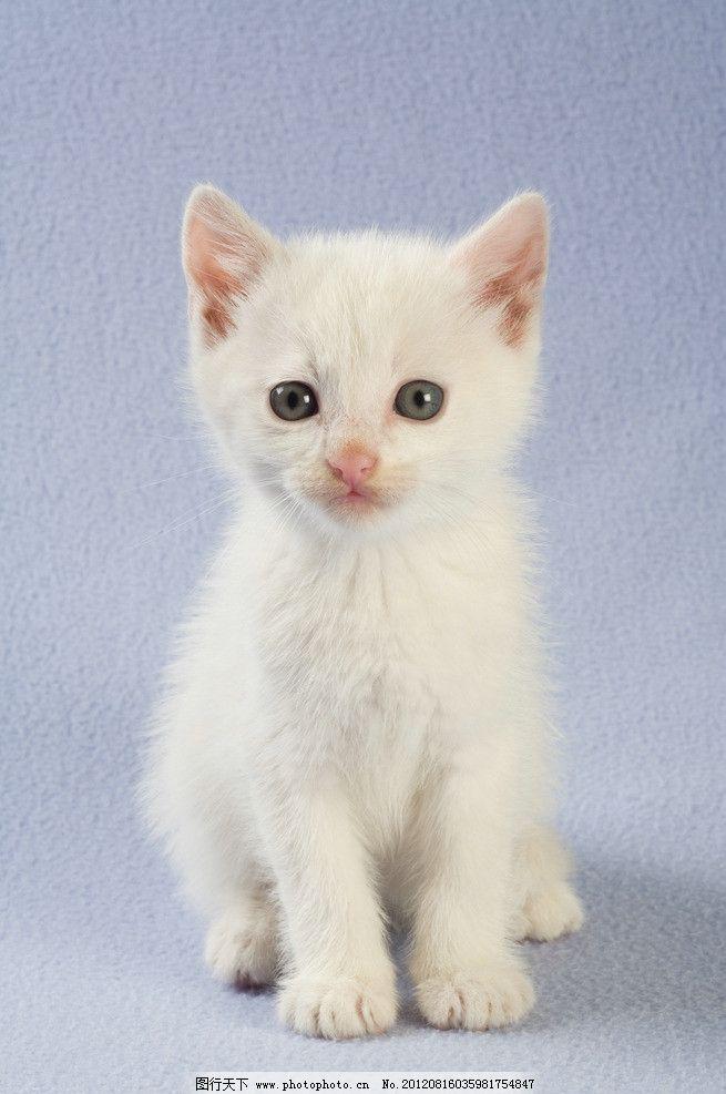 壁纸 动物 猫 猫咪 小猫 桌面 655_987 竖版 竖屏 手机