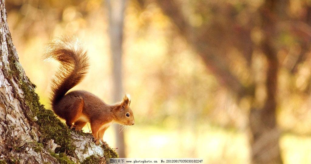 小松鼠 摄影 生物 野生 可爱 动物 大树 阳光 森林 jpg 野生动物 生物