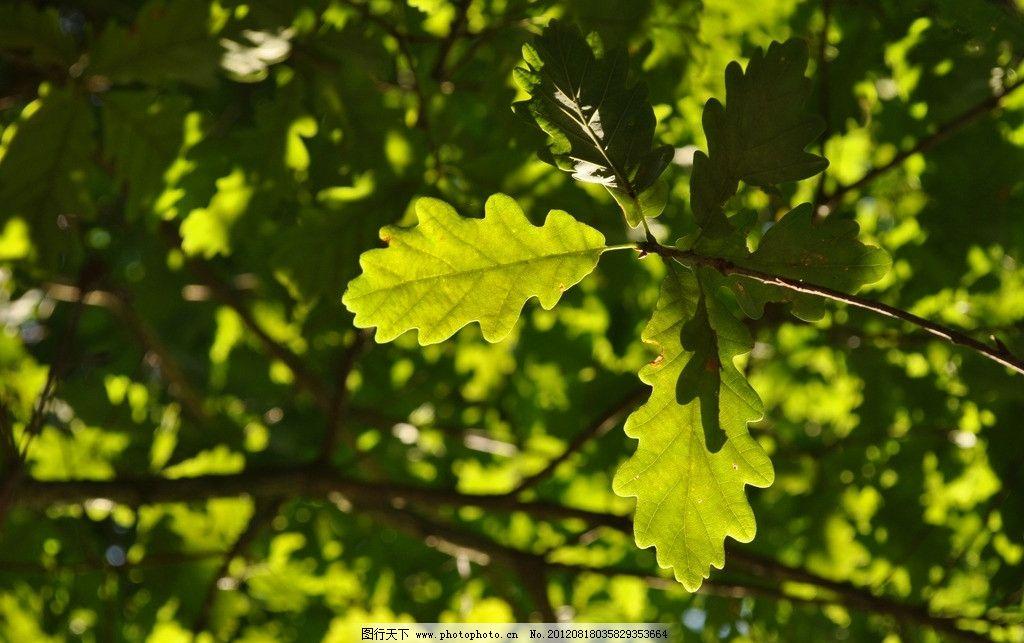 树叶 绿叶 叶子 蓝天 植物