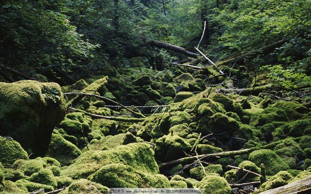 森林树枝 森林 树根 原始森林 树木树叶 生物世界 摄影 300dpi jpg