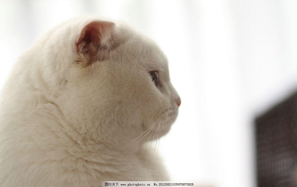 猫咪 小猫 宠物 可爱 萌 摄影
