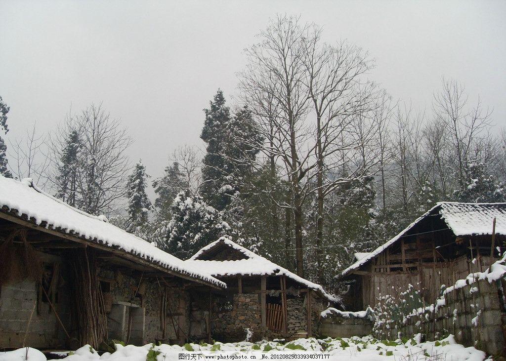 冬天农家后院 农家 雪景 树枝 雪地 房屋 建筑 农村 农家后院 国内