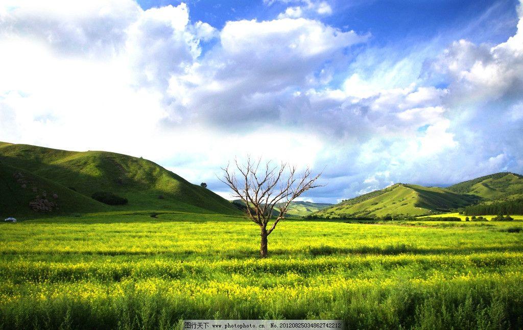 内蒙古呼伦贝尔草原图片
