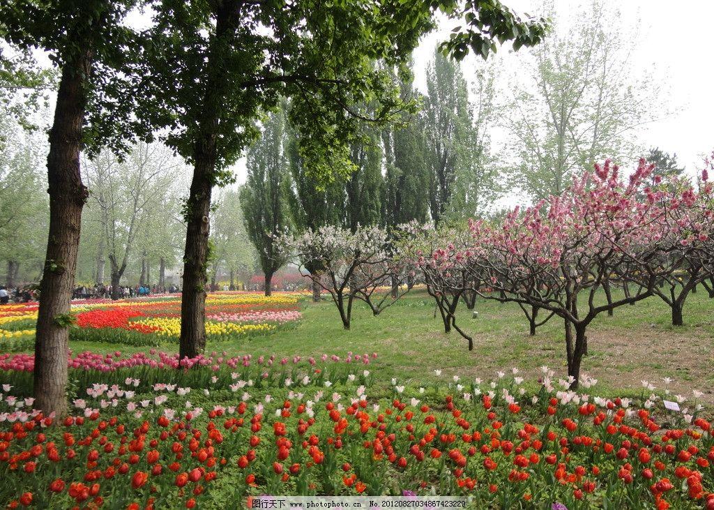 摄影图库 自然景观 自然风景  园林 花草树木樱花 植物园 公园 园林