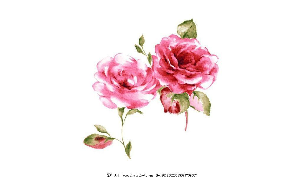 水粉花 花 月季花 绘画书法 文化艺术 设计 72dpi jpg