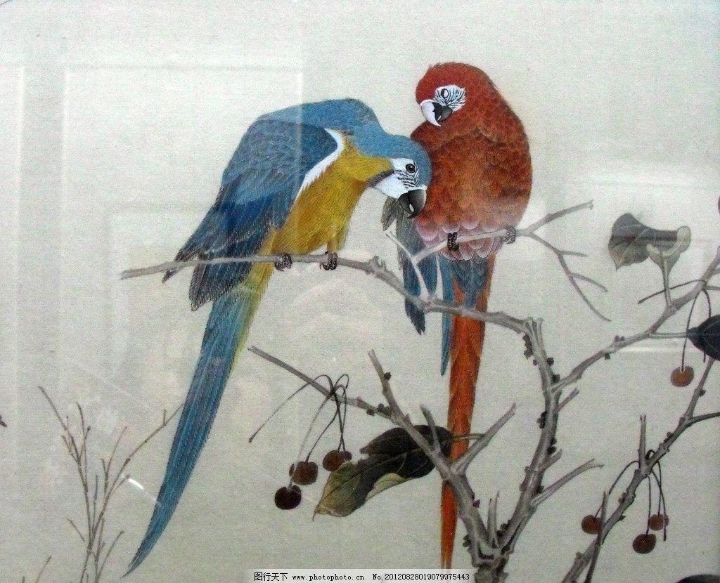 国画鹦鹉图片_绘画书法_文化艺术_图行天下图库