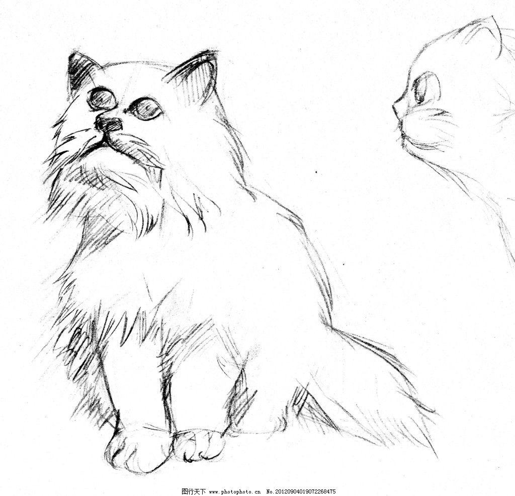 手绘的猫咪图片