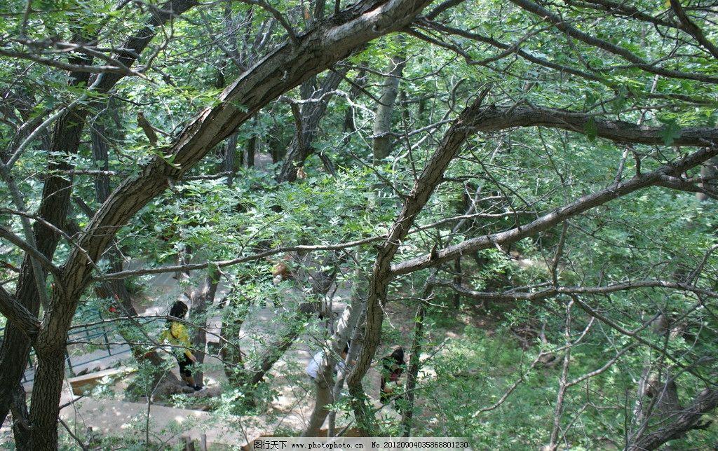 大青沟原始森林图片