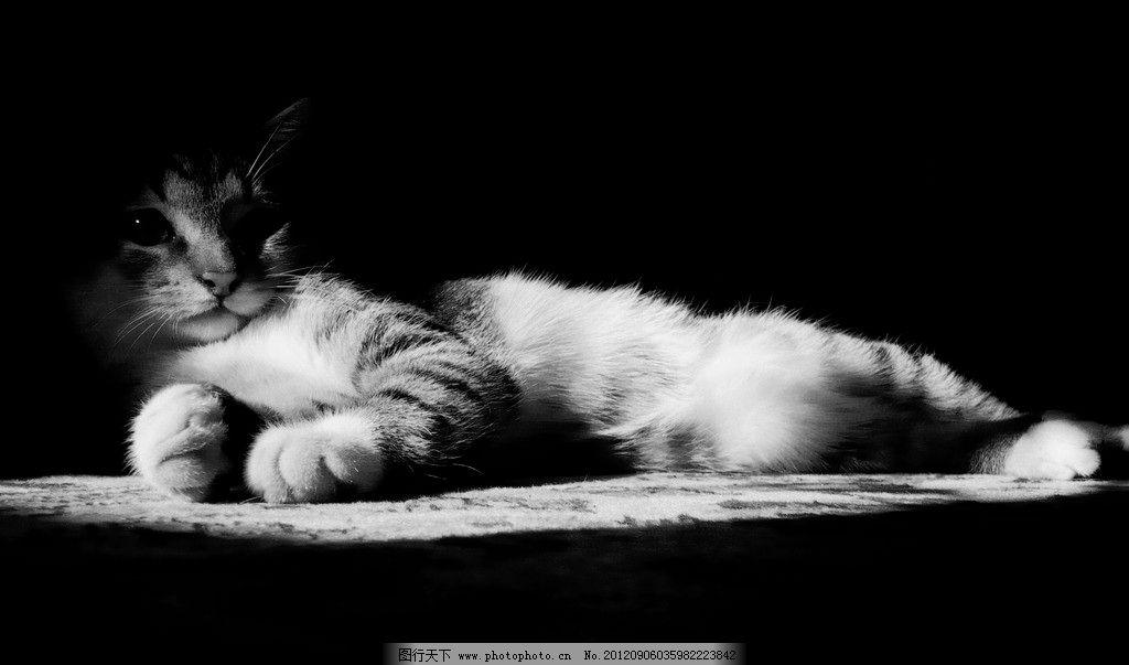 黑白猫 黑白照 花猫 宠物 动物 可爱 温馨 摄影 摄影师 抓拍