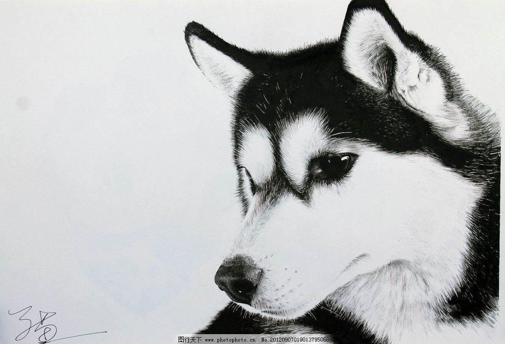 哈士奇 狗 动物 钢笔画 绘画 黑白 绘画书法 文化艺术 设计 72dpi jpg