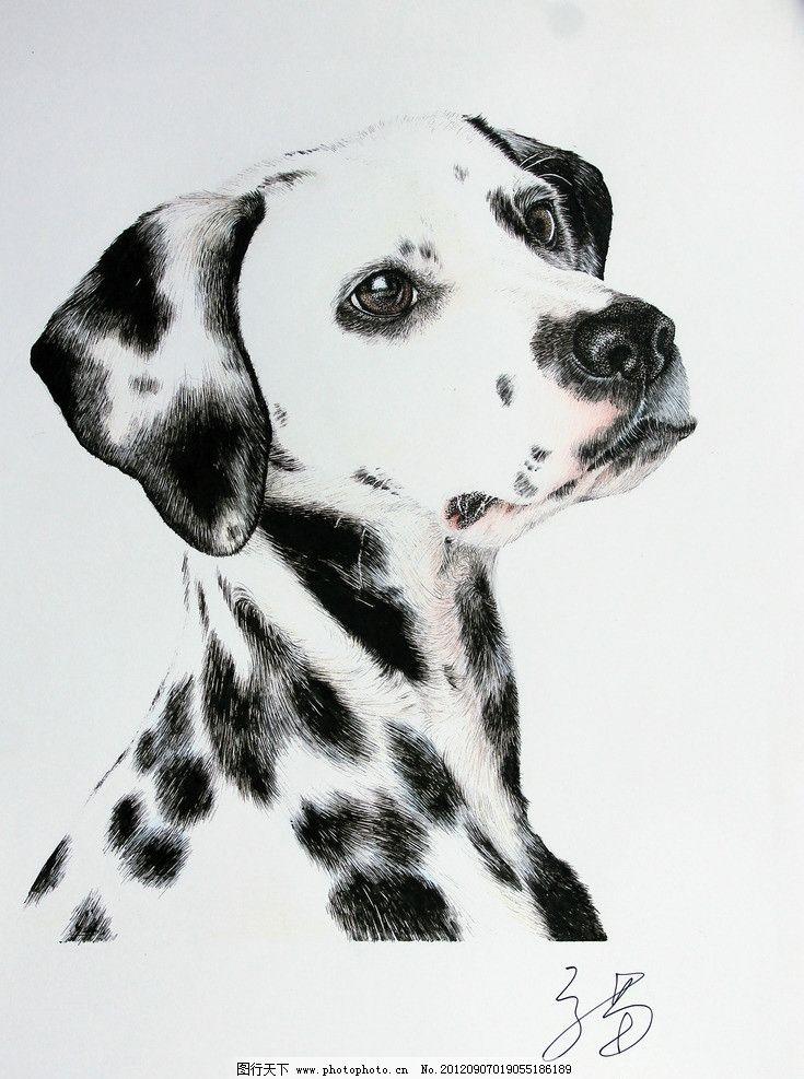 钢笔画斑点狗 绘画 钢笔画 狗 斑点狗 黑白 动物 绘画书法 文化艺术