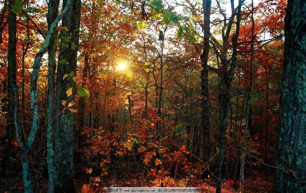 秋天树林图片_树木树叶