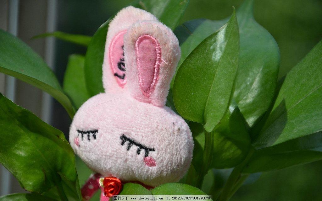 可爱小兔 绿萝吊兰 绿色植物 办公室植物 植物 吊兰 小白兔 生活素材