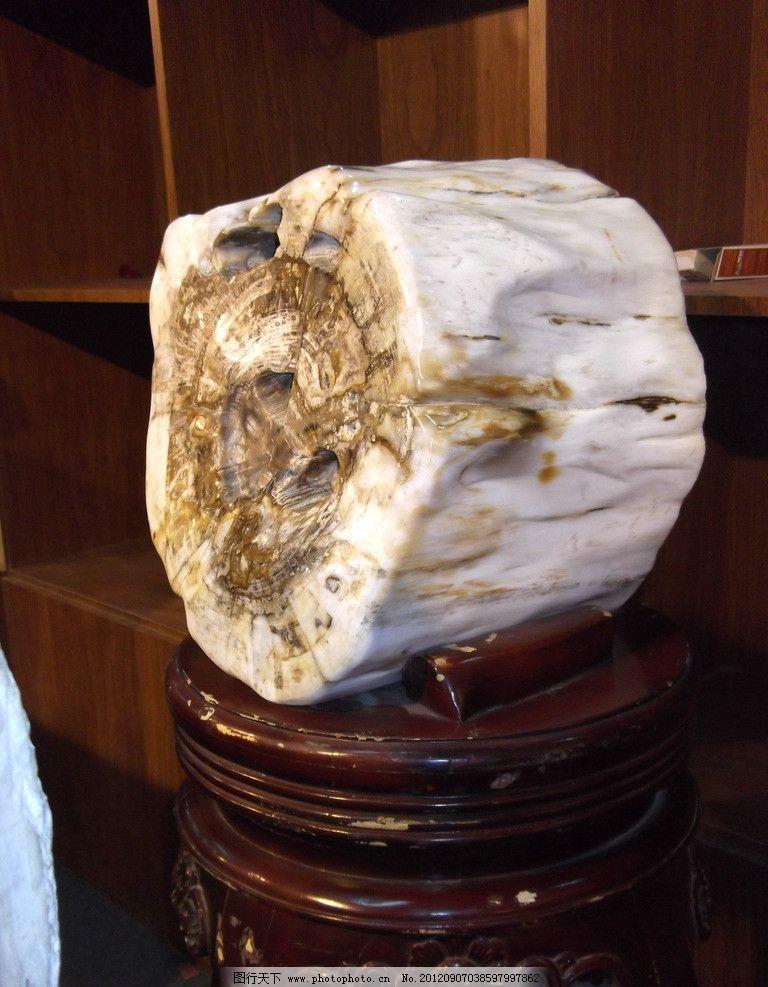 树化石为什么有白色