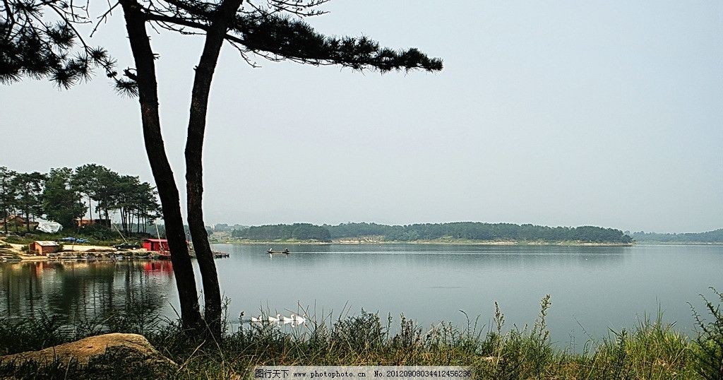 天鹅湖 湖水 鹅群 水面 山峦 草地 山水风景 自然景观 摄影