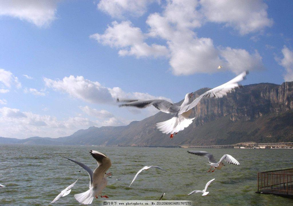 海鸥 蓝天白云 海鸟 大海 蓝天 白云 白云朵朵 唯美风景 海岸 草原 自