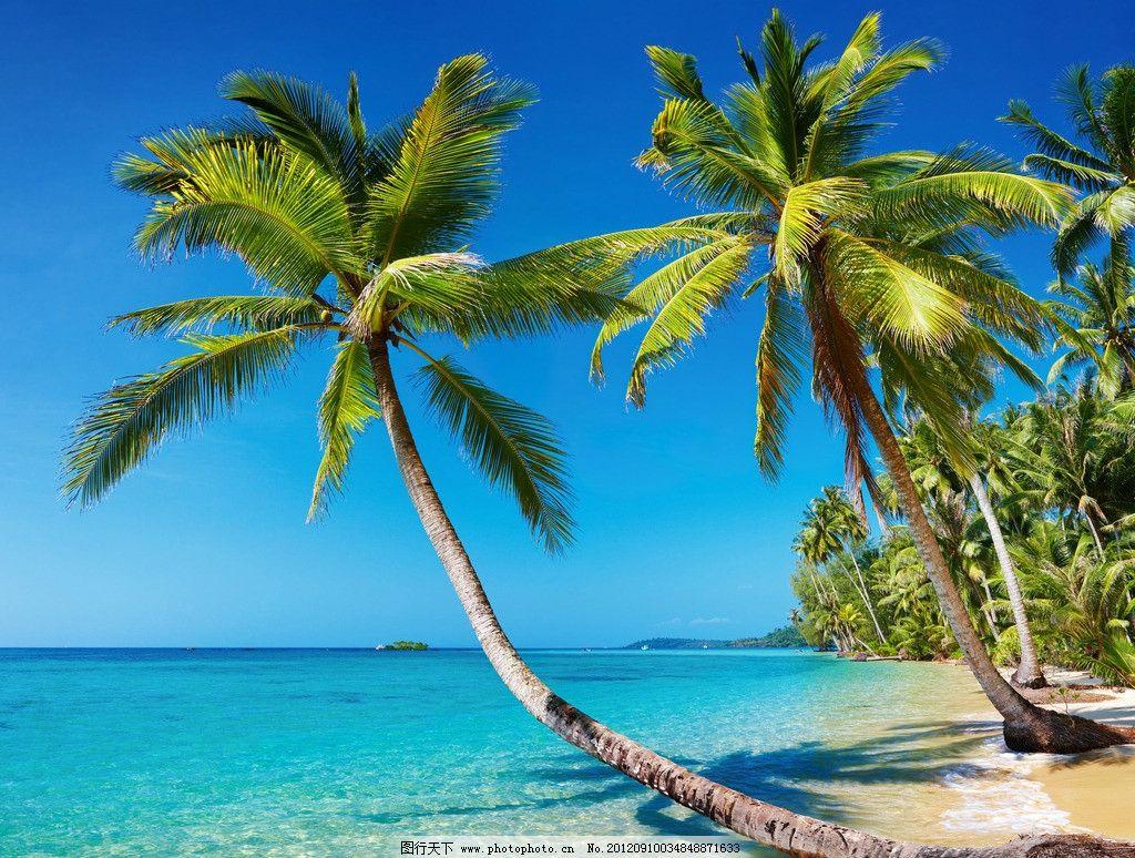 热带海滩沙滩 沙滩 沽岛 泰国 热带海滩 棕榈树 椰树 风景 自然风景