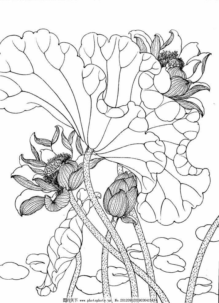 工笔画线描花卉荷花图片