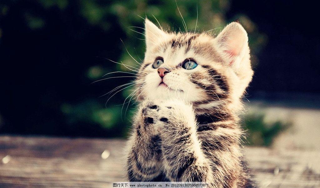 猫咪 可爱 宠物 夜猫 家猫 宠爱 眼神 猫眼 毛发 花纹 摄影