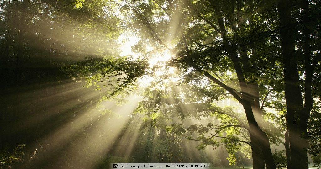树林 斑驳 高清图片 树叶 叶子 绿叶 绿色 风光 树木 风景 原始森林