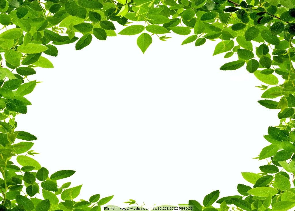 绿色树叶相框图片