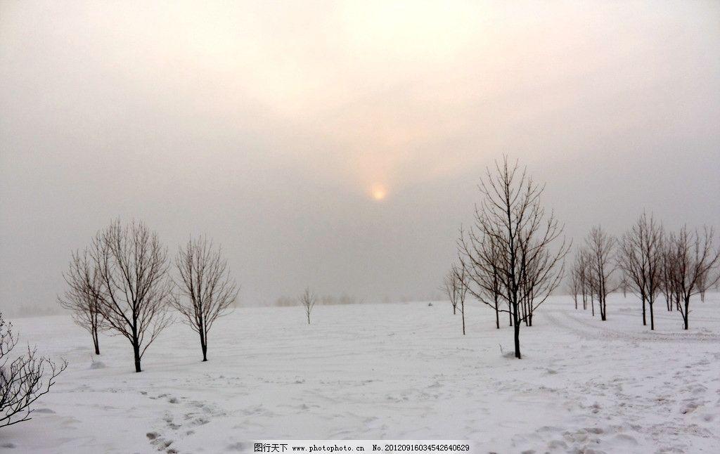 晨曦 日出 冬天日出 白雪 雪地 白桦树 树木 冬天 白色 田园风光 自然