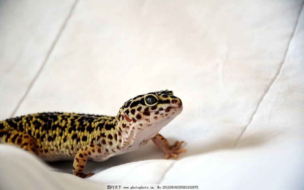 蜥蜴 野生动物 爬虫类 冷血动物 四脚蛇 四足蛇 爬行动物 蜥蜴素材