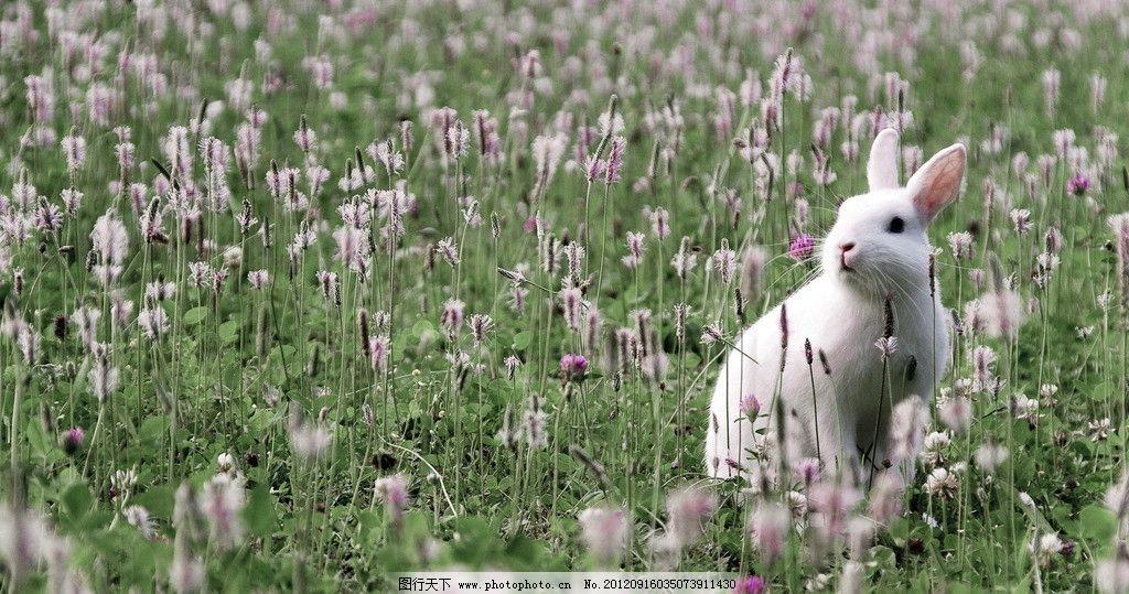 白兔 兔子 草原 花田 白色 可爱 兔兔 小白兔 野生动物世界