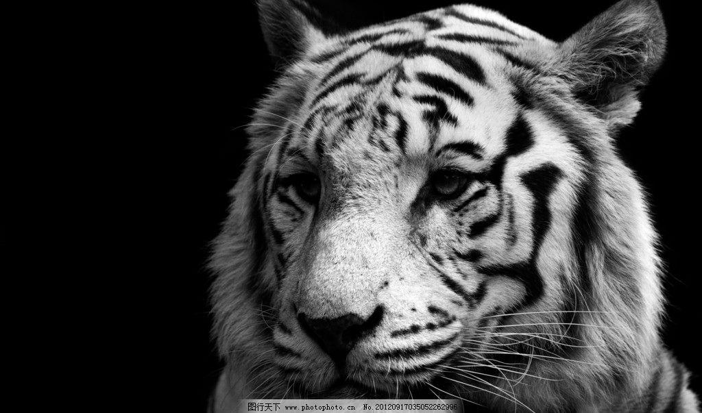 野生动物世界