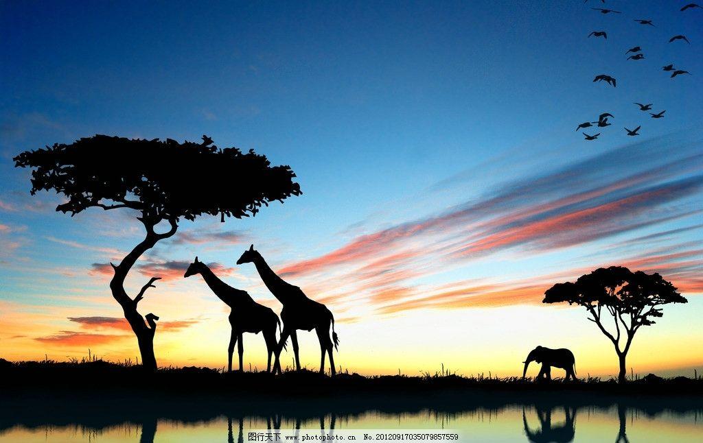 非洲大草原 非洲 草原 长颈鹿 黄昏 动物 野生动物 生物世界 摄影 300