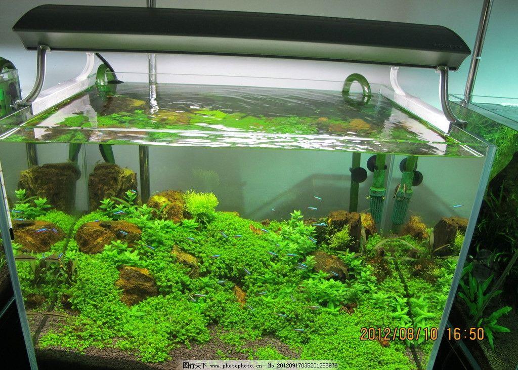 鱼缸 鱼 水草 鱼类 生物世界 摄影 180dpi jpg