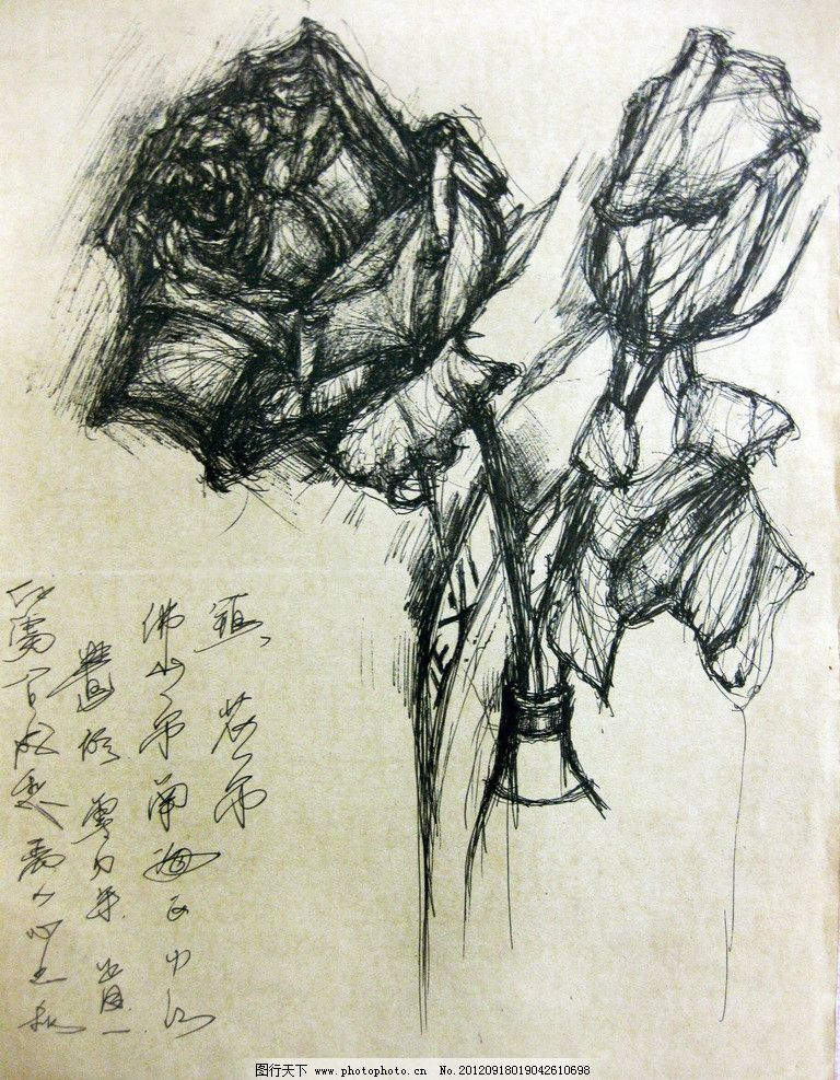 手绘玫瑰 玫瑰 手绘 中性笔
