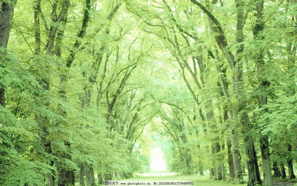 绿树林 森林公园 春天 春天风景 大自然 风景画 古树 林间 绿草地