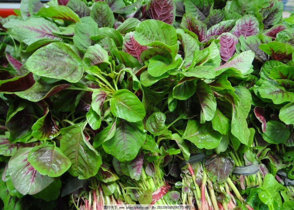 红苋菜高清素材图片