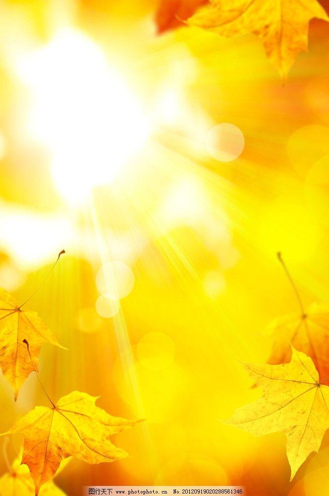 秋天树叶 枫叶 秋天 树叶 金色 落叶 阳光 黄色 背景底纹 设计 300dpi图片