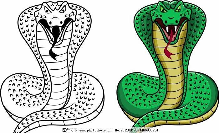 手绘眼镜蛇 卡通 可爱 蛇 表情 手绘 矢量 野生动物 生物世界 eps