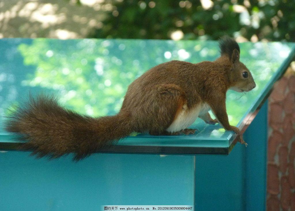 松鼠 动物 可爱 野生动物 生物世界 摄影 180dpi jpg