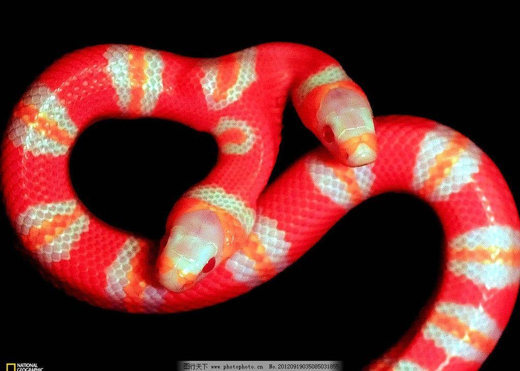 环纹 盘据 缠绕 恐怖 蛇斑纹 野生动物 生物世界 摄影 蛇年 野生动物