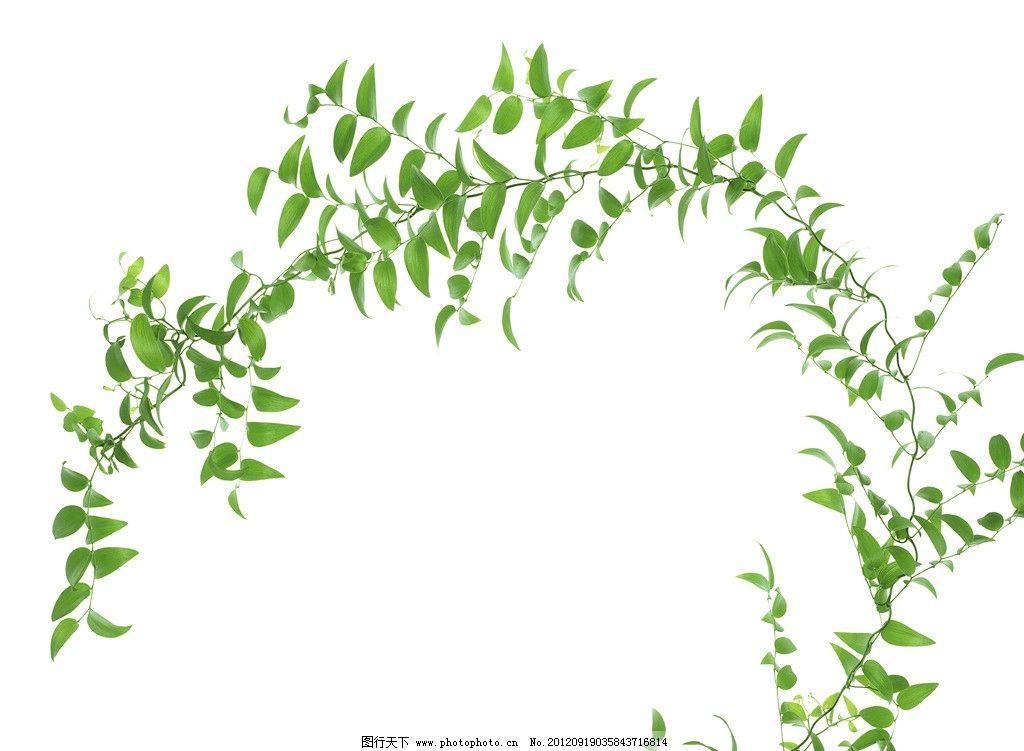 树木藤蔓简笔画