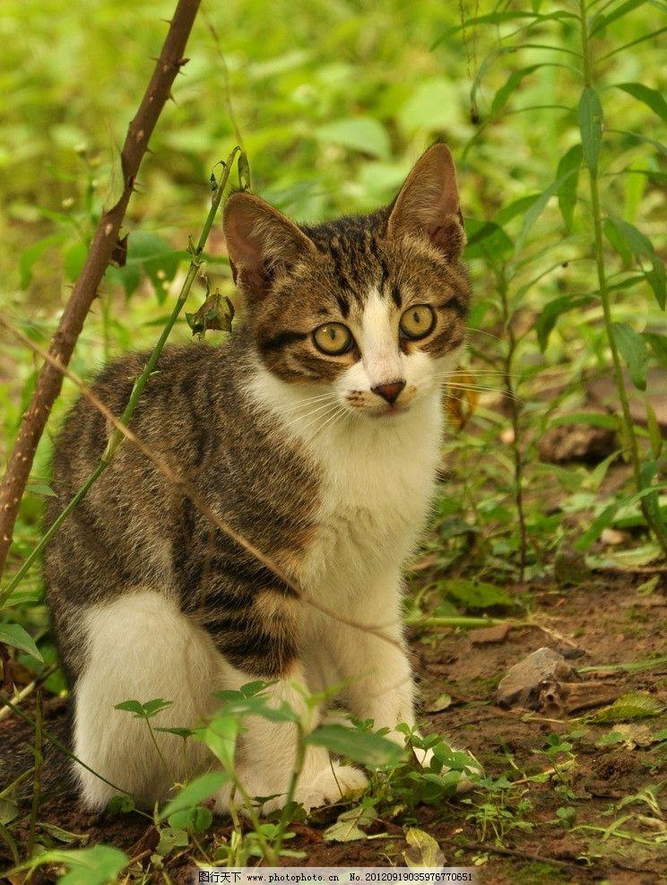 野猫 花猫 白肚 绿叶 树枝